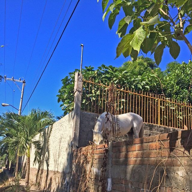 #Sundays in #Sayulita 🌴🐎 #travelalphas #travel