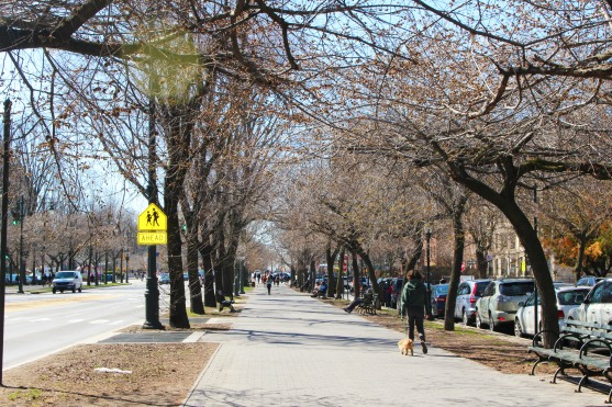 Eastern Parkway, modeled to be the American Champs-Élysées