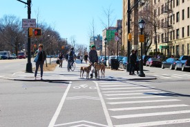 Italian Greyhounds on Eastern Parkway
