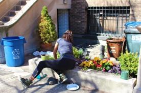 Spring Flowers in Park Slope