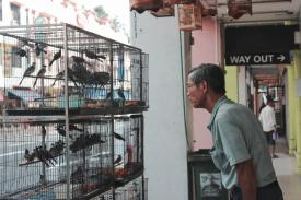 man looking at a bird cage